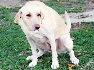 Natural Remedies for Dogs with UTI